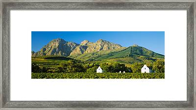 Vineyard In Front Of Mountains Framed Print by Panoramic Images