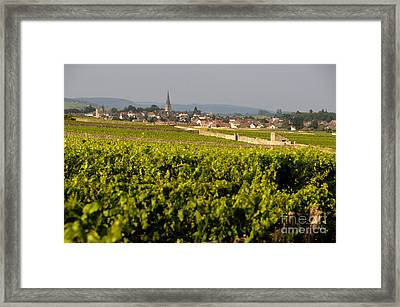 Vineyard In Front Of The Village Of Meursault. Burgundy Wine Road. Cote D'or.burgundy. France. Europ Framed Print by Bernard Jaubert