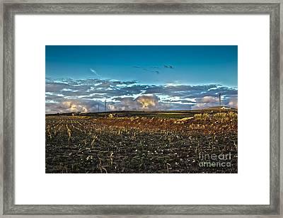 Vineyard In Lava Framed Print by Patricia Hofmeester