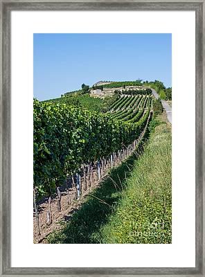 Vineyard In Rhineland Palatinate Framed Print by Palatia Photo
