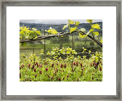 Vineyard In Spring Framed Print by Jean Noren