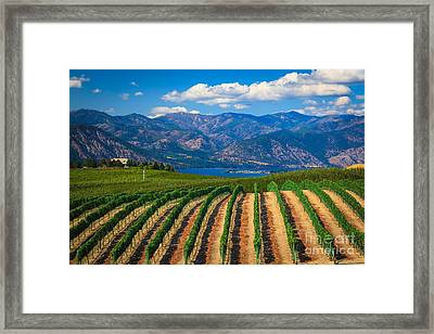 Vineyard In The Mountains Framed Print