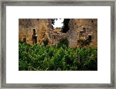 Vineyard In The Ruins Framed Print by Christine Burdine