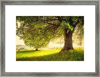 Vineyard In The Sun Framed Print by Debra and Dave Vanderlaan