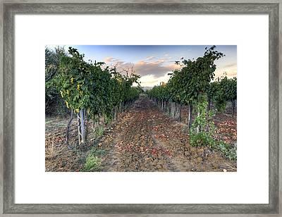 Vineyard In Tuscany Framed Print by Al Hurley