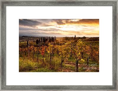 Vineyard In Tuscany Framed Print