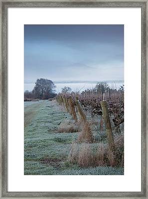 Vineyard In Winter During Fog, Ukiah Framed Print by Panoramic Images