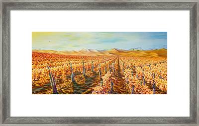 Vineyard Framed Print by Josh Long