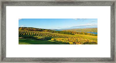 Vineyard, Keuka Lake, Finger Lakes, New Framed Print