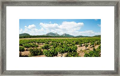 Vineyard, Les Baux De Provence Framed Print by Panoramic Images