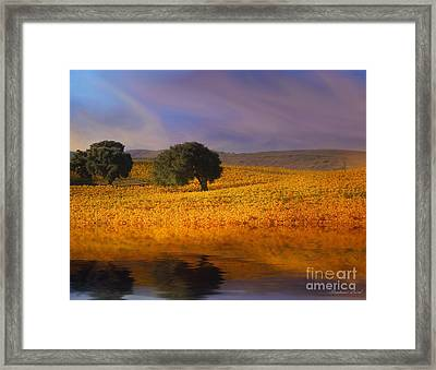 Vineyard Magic Framed Print by Stephanie Laird