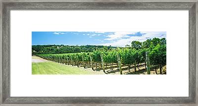 Vineyard, Margaret River, Western Framed Print by Panoramic Images