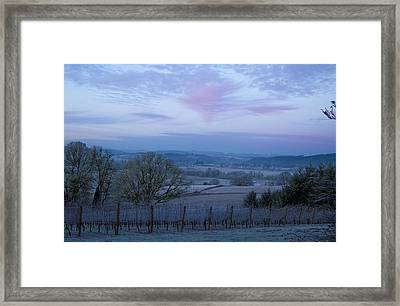 Vineyard Morning Light Framed Print by Jean Noren