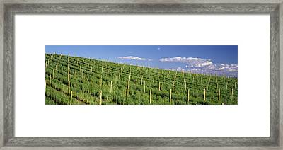 Vineyard, Napa County, California, Usa Framed Print