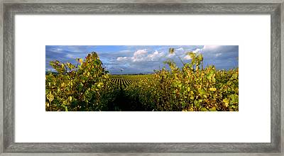 Vineyard, Napa Valley, California, Usa Framed Print