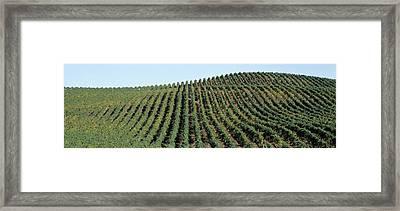Vineyard, Napa Valley, Napa County Framed Print by Panoramic Images