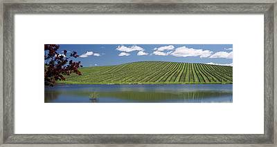 Vineyard Near A Lake, Napa County Framed Print