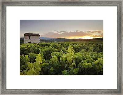Vineyard Near Malemort-du-comtat Framed Print by Andy Kerry