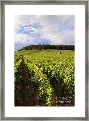Vineyard Near Monthelie. Burgundy. France. Europe Framed Print by Bernard Jaubert