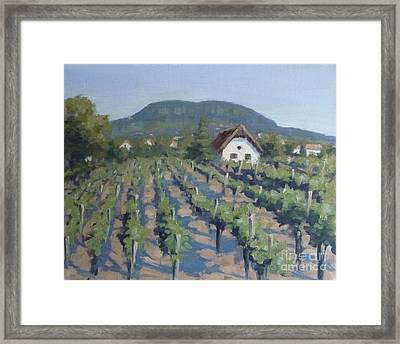 Vineyard Of Badacsony Framed Print