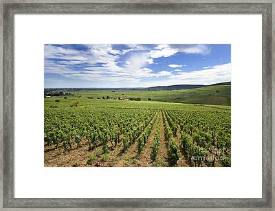 Vineyard Of Cotes De Beaune. Cote D'or. Burgundy. France. Europe Framed Print