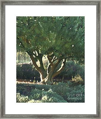 Vineyard Olive Framed Print by Artist and Photographer Laura Wrede