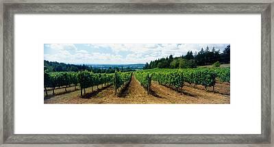 Vineyard On A Landscape, Adelsheim Framed Print
