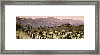 Vineyard On A Landscape, Asti Framed Print