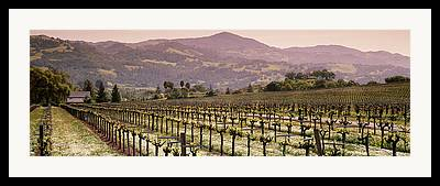 Asti Vineyards Framed Prints