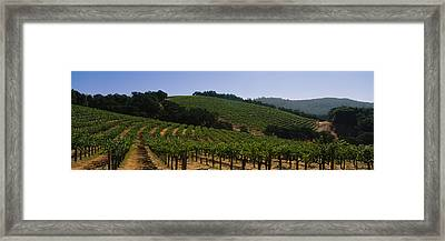 Vineyard On A Landscape, Napa Valley Framed Print