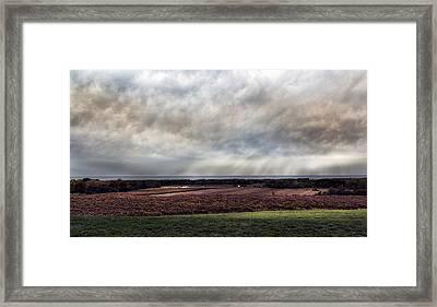Vineyard On The Lake Framed Print