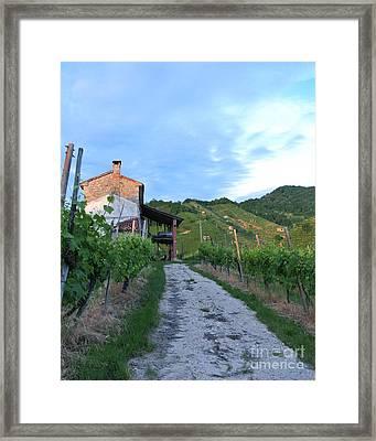 Vineyard Path Framed Print