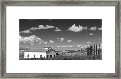 Vineyard Framed Print by Peter Tellone