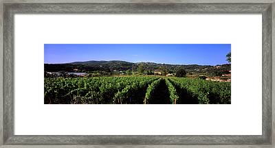 Vineyard, Portoferraio, Island Of Elba Framed Print by Panoramic Images