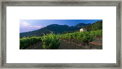 Vineyard, Provence-alpes-cote Dazur Framed Print