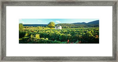 Vineyard Provence France Framed Print