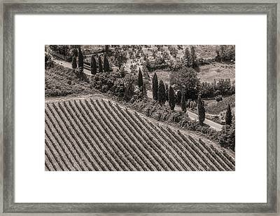 Vineyard Road Framed Print by Clint Brewer