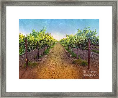 Vineyard Road Framed Print by Shari Warren