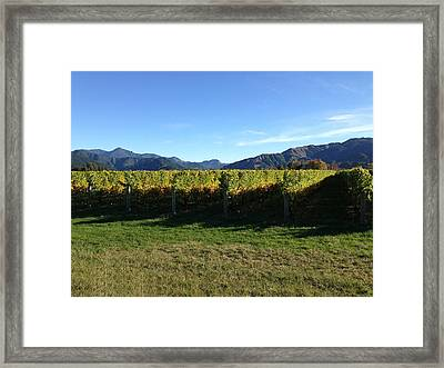 Vineyard Framed Print by Ron Torborg