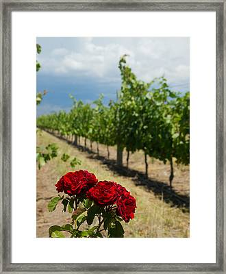 Vineyard Rose Framed Print