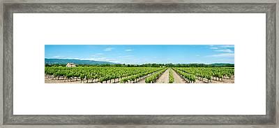 Vineyard, Route Dansouis, Cucuron Framed Print by Panoramic Images