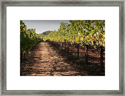 Vineyard Soil Of Sonoma Framed Print by Kent Sorensen