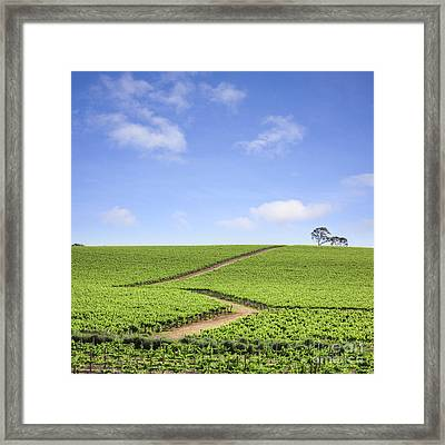 Vineyard South Australia Framed Print