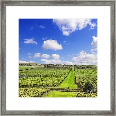 Vineyard South Australia Square Framed Print