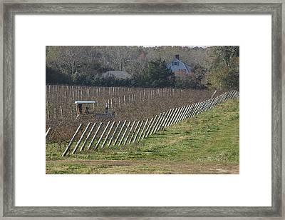 Vineyard Southold New York Framed Print by Bob Savage