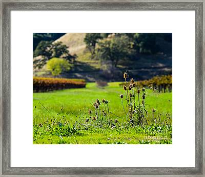 Vineyard Thistles Framed Print