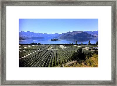 Vineyard View Of Ruby Island Framed Print