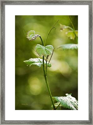 Vineyard Vine Framed Print by Christina Rollo