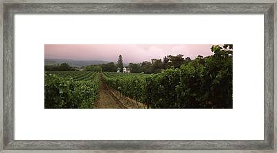 Vineyard With A Cape Dutch Style House Framed Print by Panoramic Images