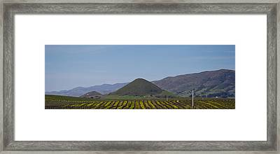 Vineyard With A Mountain Range Framed Print by Panoramic Images